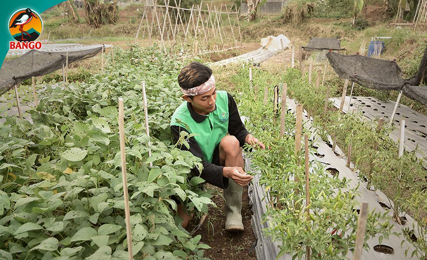 Petani Muda Bango di The Learning Farm
